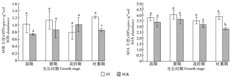 对土壤氨氧化细菌和氨氧化古菌群落结构及丰度的影响